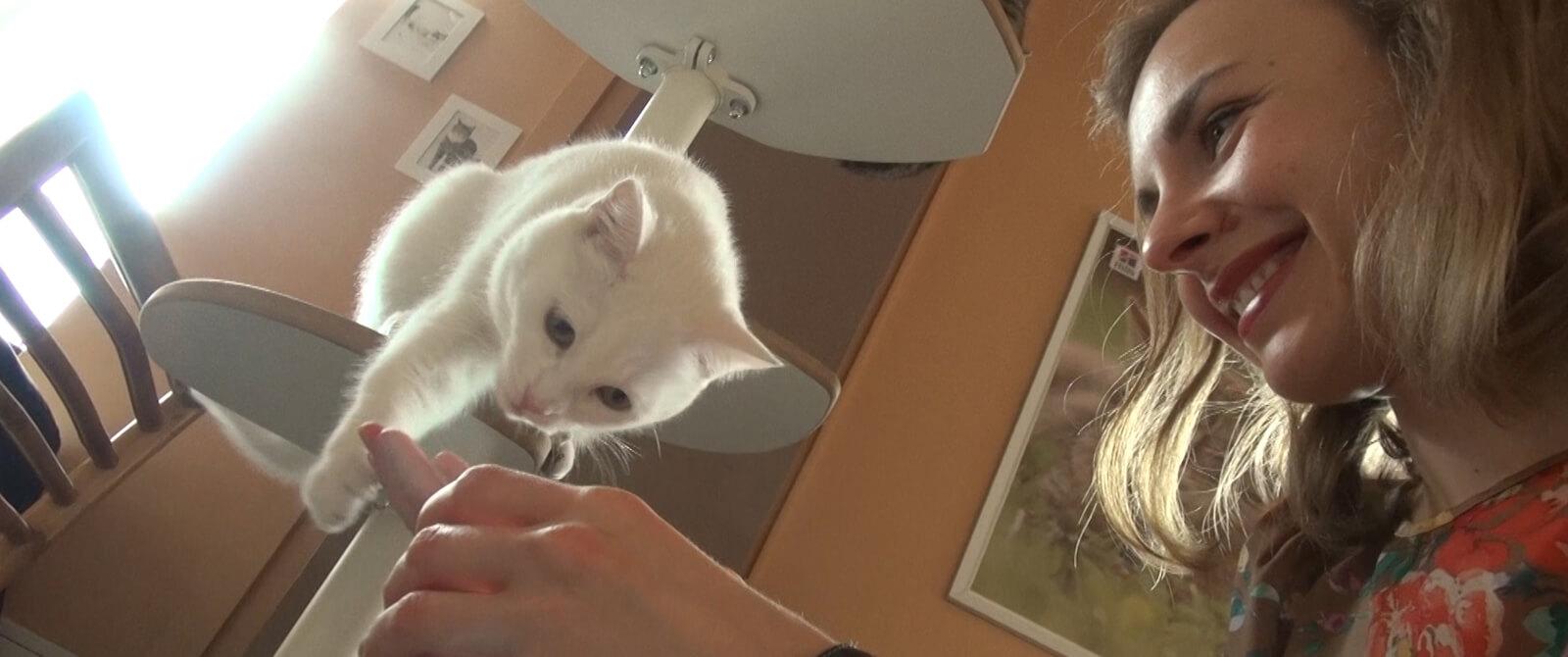 Katė su kačių kavinės lankytoja