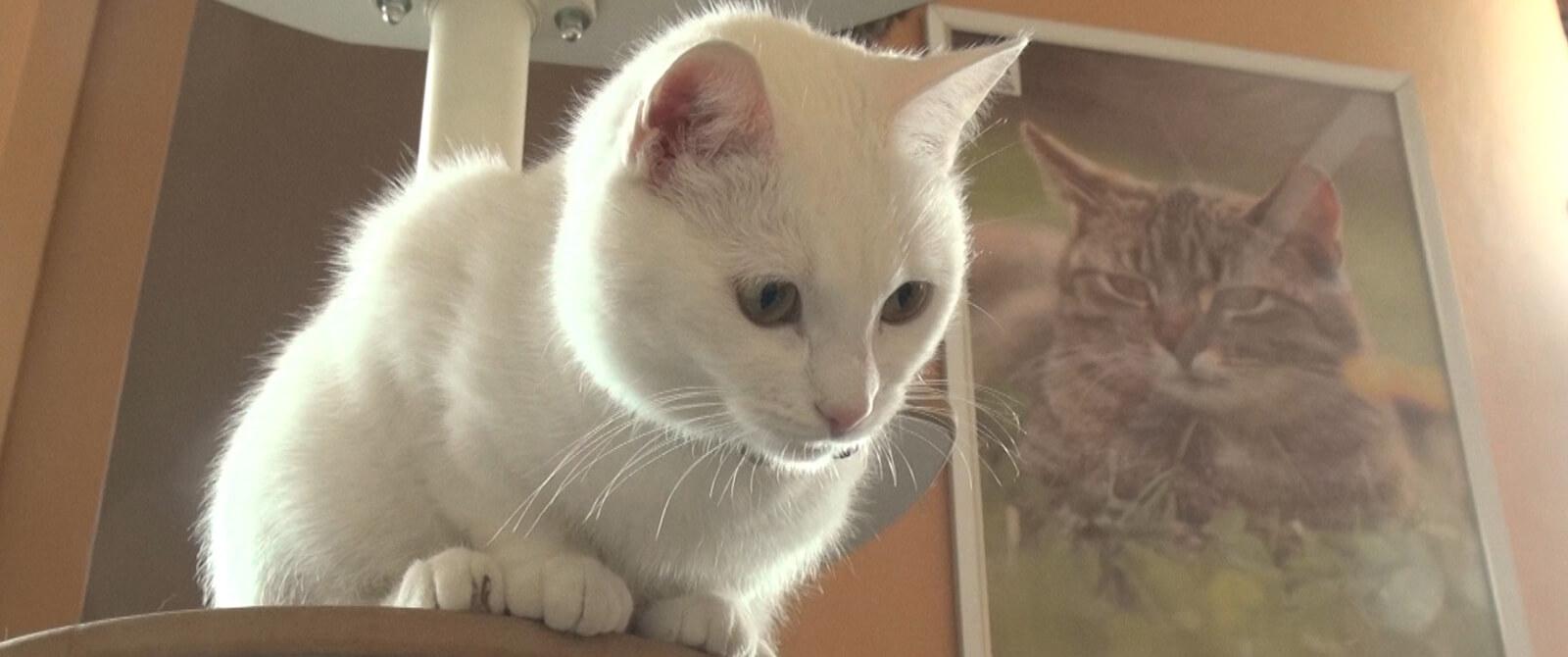 Kačių kavinės katė