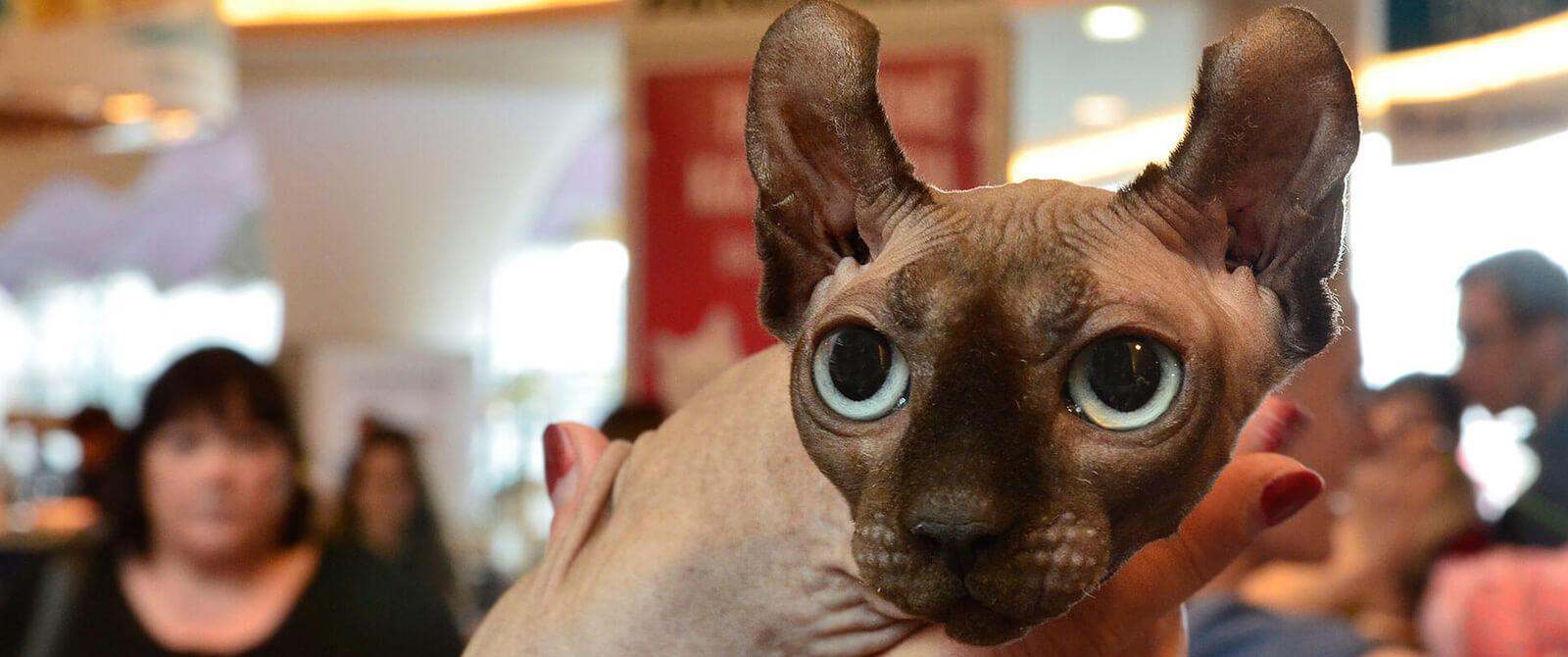 Kačių parodoje apsilankė elfas