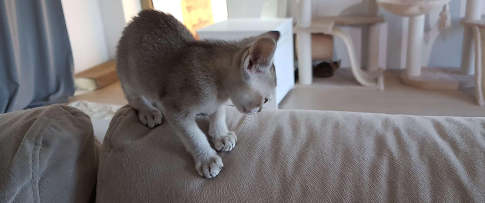 Namų interjeras ir katinas