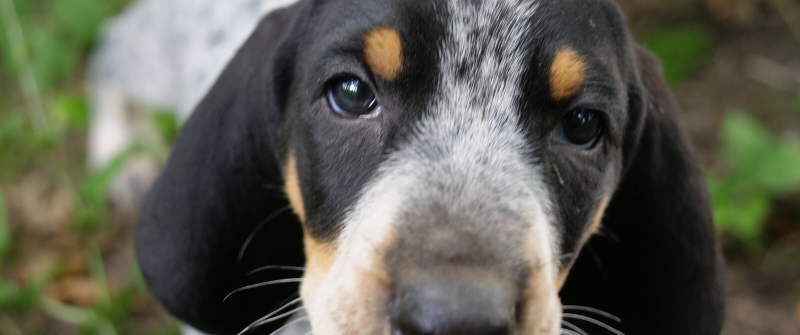 Šunų veislės, rodytos laidoje