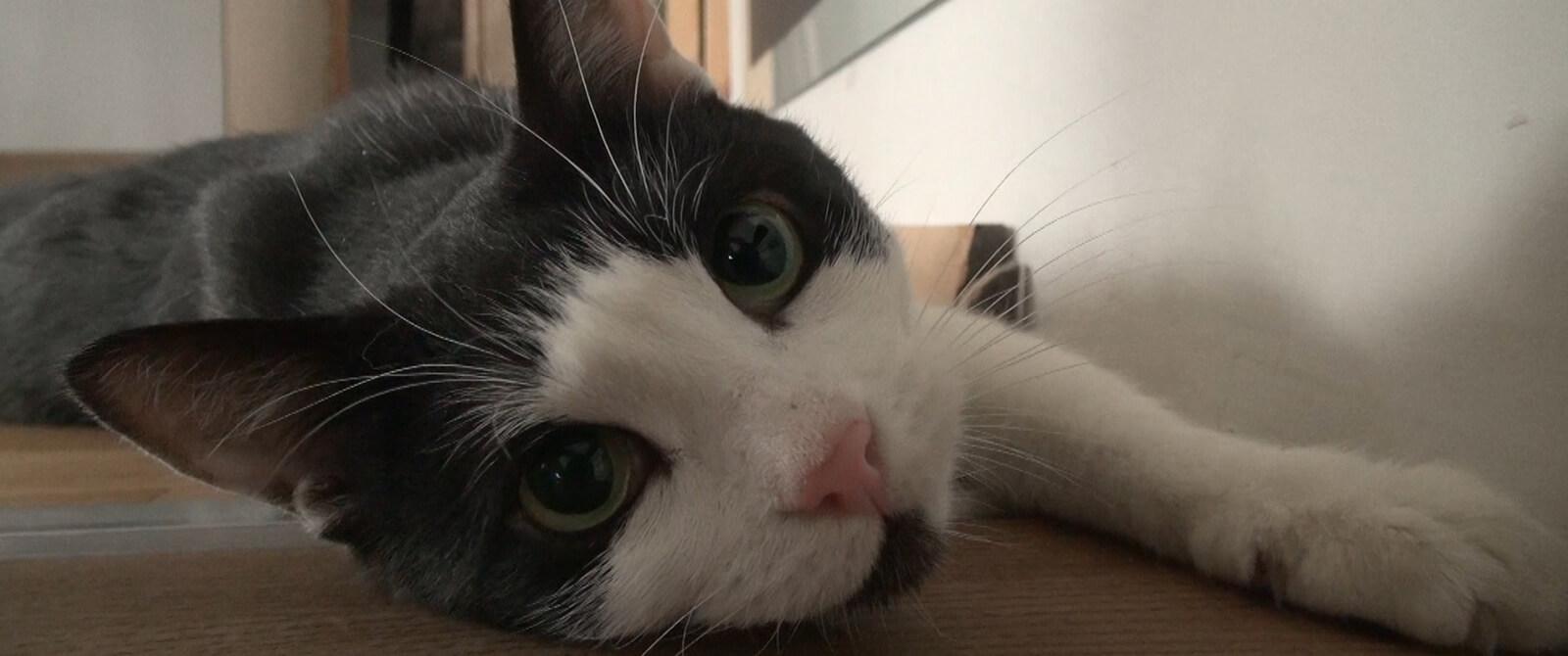 Katinas vardu Šeši