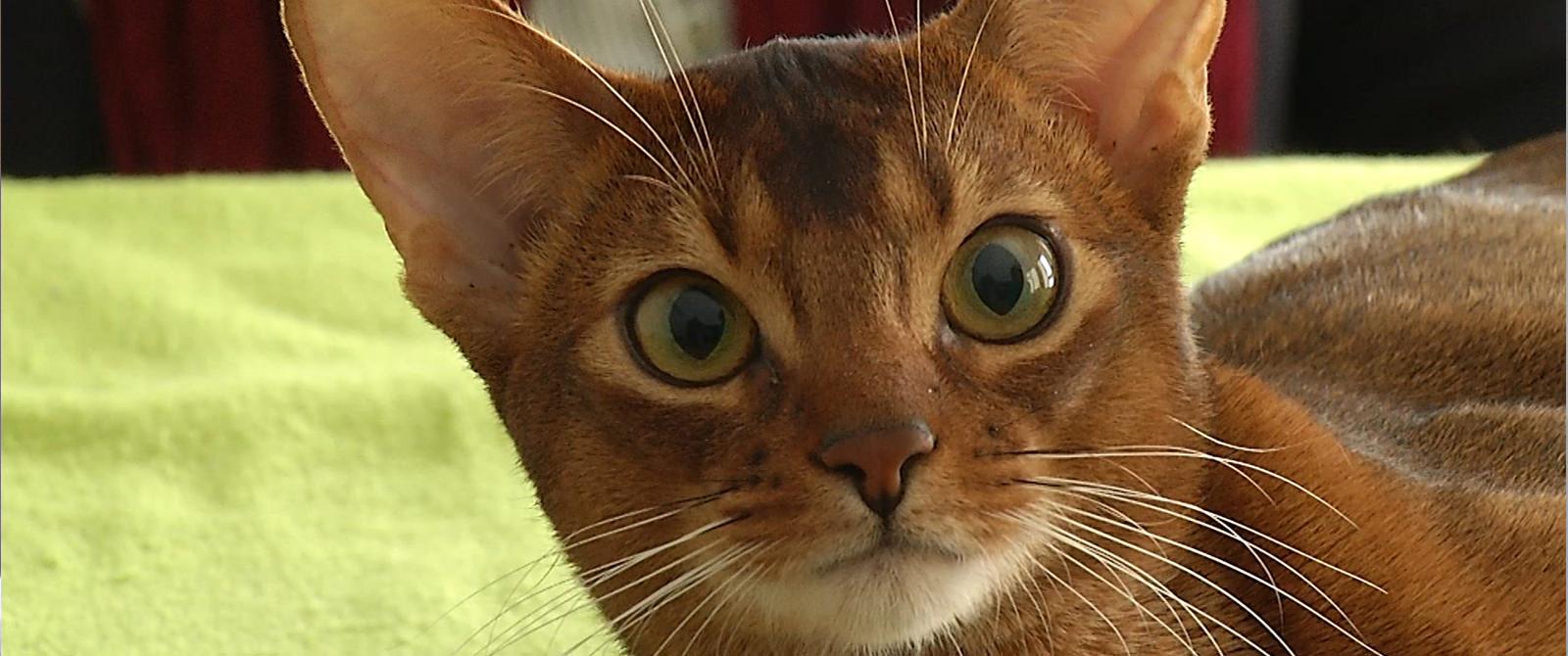 Ar žinote, kad katės...