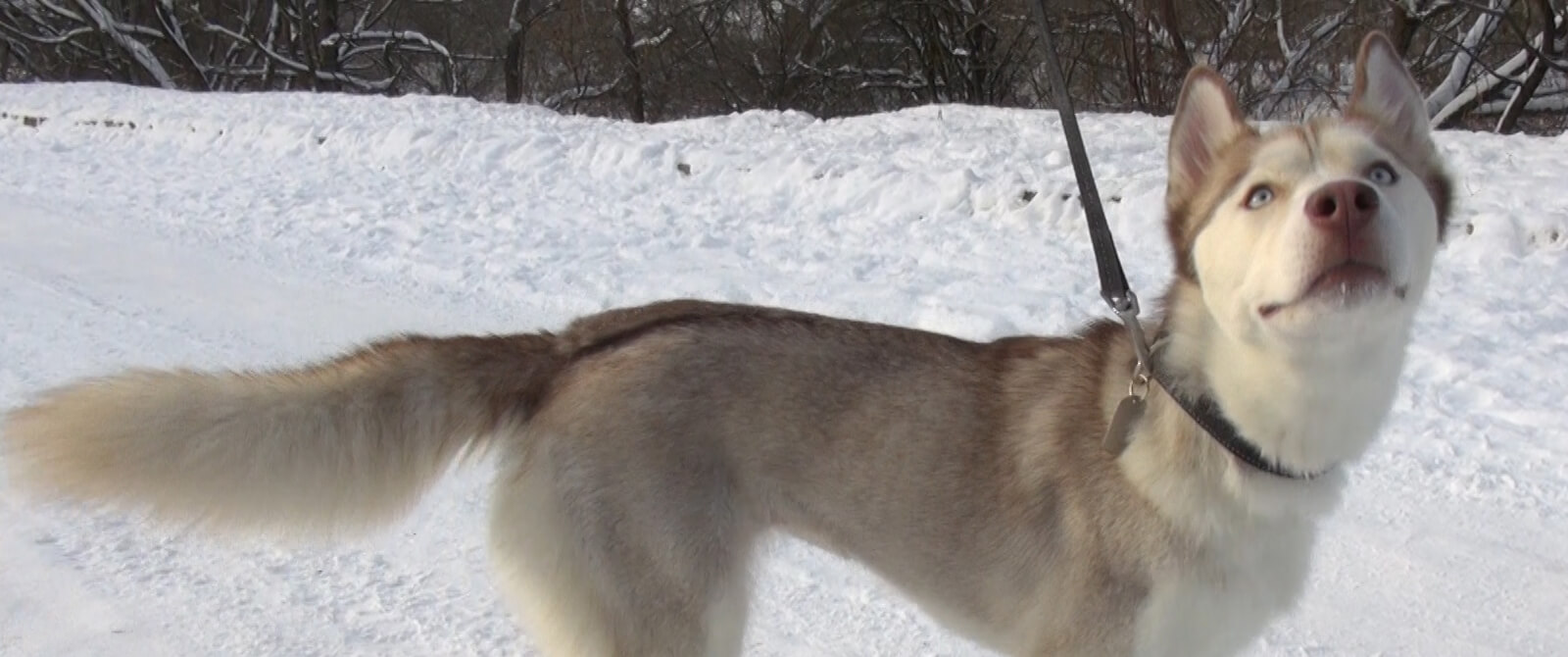 Šuo vardu Kiora