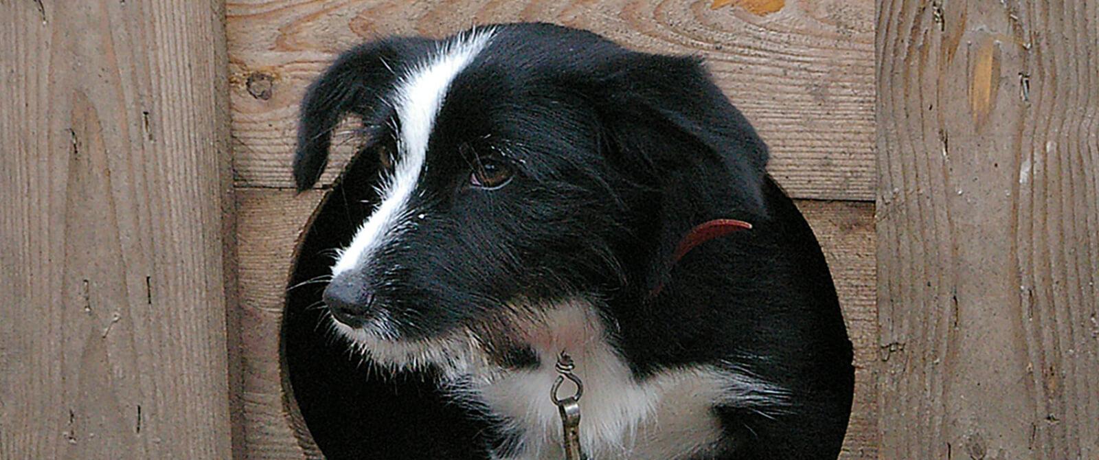Atšauktas privalomas gyvūnų ženklinimas