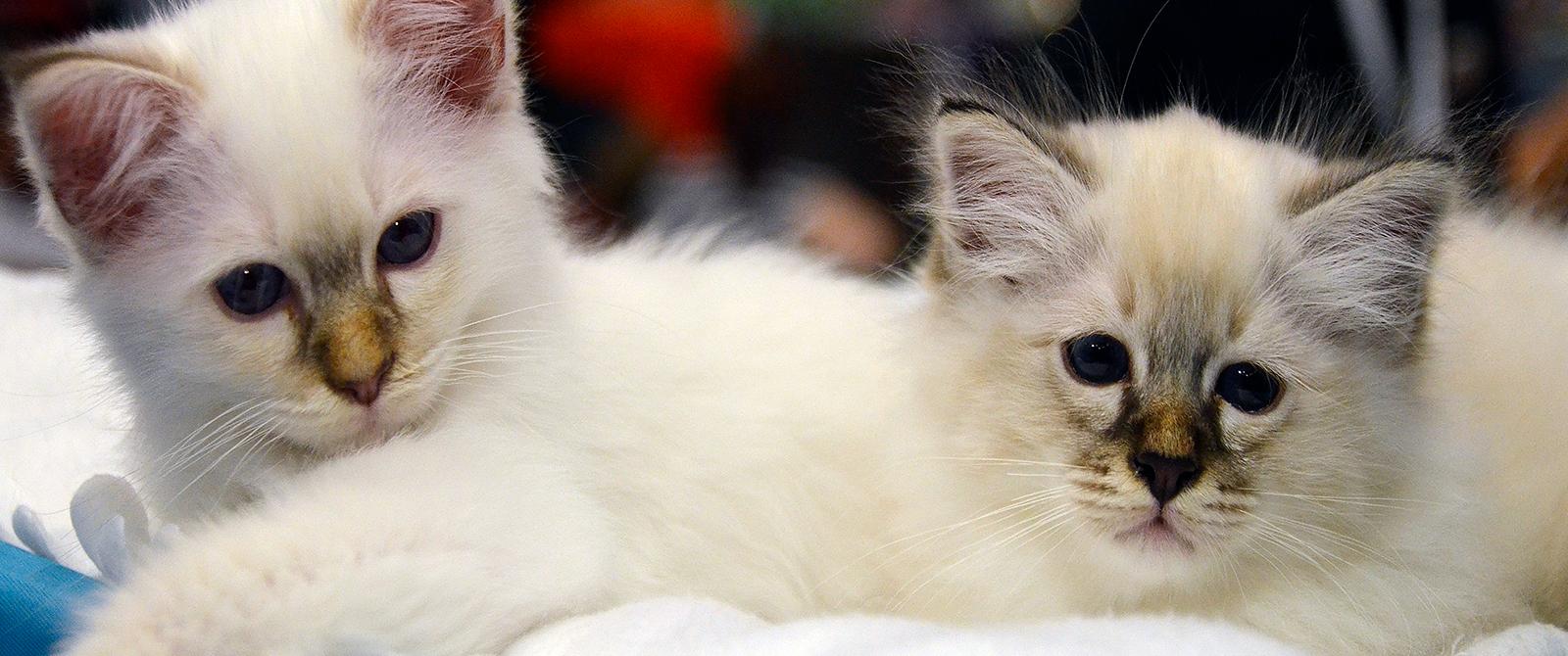Pirmoji ALPHA CATUM kačių paroda