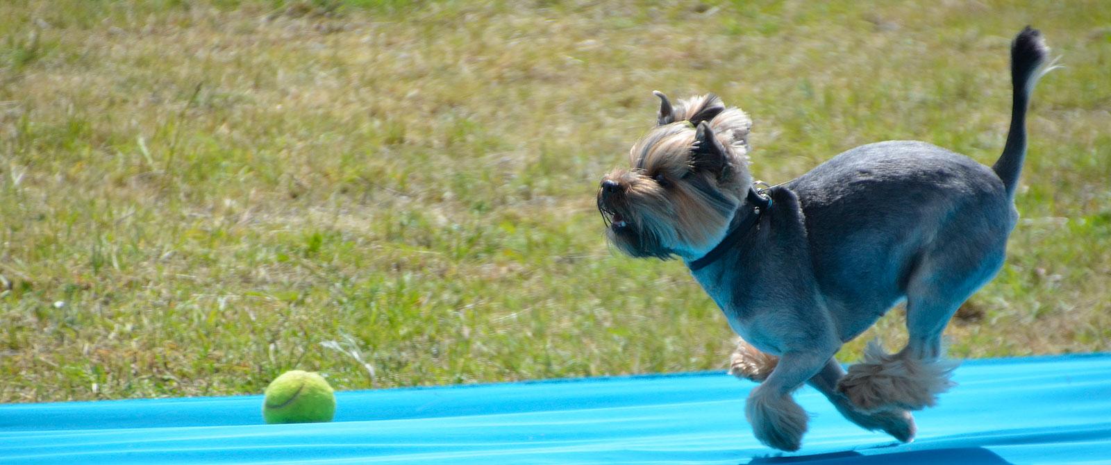 Šunų bėgimo varžybos