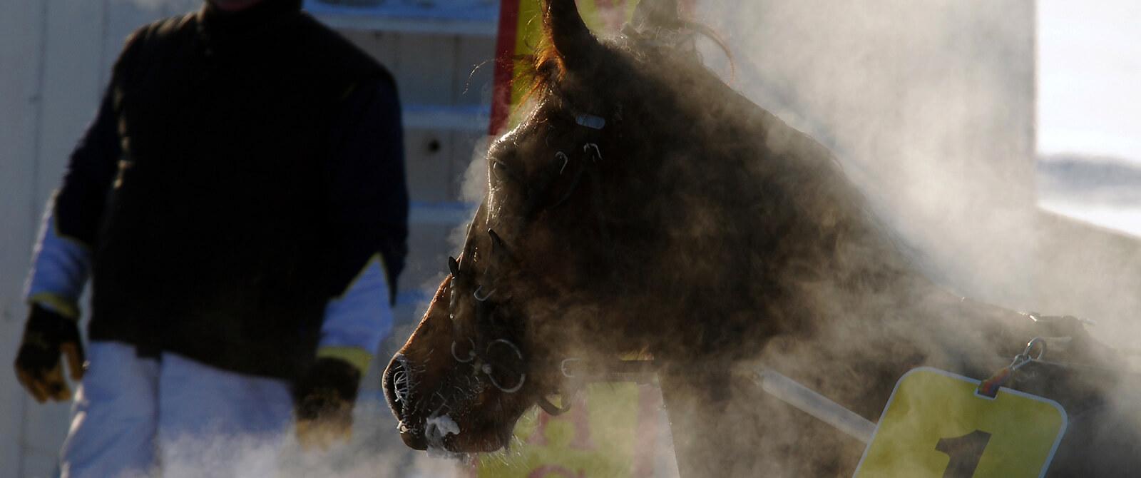 Arklio diena